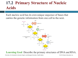 17 2 Primary Structure Of Nucleic Acids