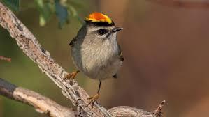 Guide To North American Birds Audubon