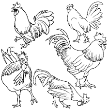 Rooster Coloring Pages To Print Tagged