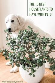 non toxic houseplants great for pet
