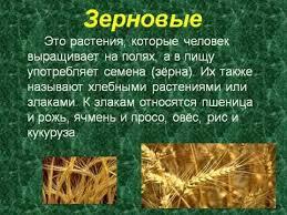 Культурные растения avi  Культурные растения avi