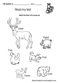 kid7_deer nature of science worksheet,printable work sheets,kindergarten on grade 1 science worksheets