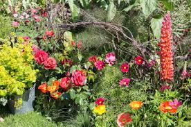 Small Picture The Anneka Rice Colour Cutting Garden at the Chelsea Flower Show