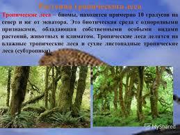 Презентация на тему Доклад На тему Животные и растения  2 Растения тропического