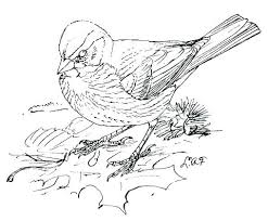 Bluebird Coloring Page Flying Bird Best Birds Images On For
