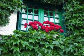 how to plant garden. ivy can be used to accent a garden in several ways. how plant