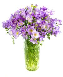 freesias lilac