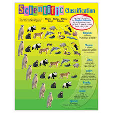 Chart Scientific Classification Animal Classification