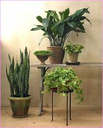 good house plants geous ideas about best indoor on low light