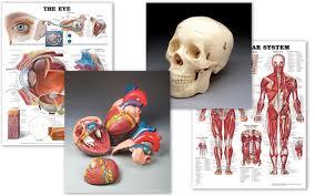 Virtual Anatomy Center