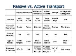 Active Vs Passive Transport Venn Diagram Pictures Of Active Transport Vs Passive Transport Venn Diagram