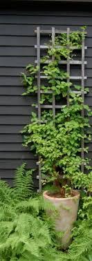 Best Climbing Plants  Burkeu0027s BackyardWall Climbing Plants In Pots