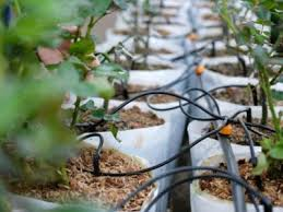 water for greenhouses information about greenhouse watering systems
