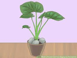 image titled prevent cats from digging up houseplants step 1