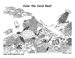 Coral Reef Food Web Coloring Pages Google Search Webs Coral