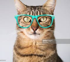 Cute modern cat in blue glasses : Stock Photo
