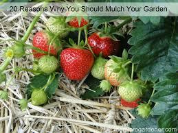best mulch for garden. Beautiful For Intended Best Mulch For Garden W