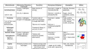 Macromolecules Chart Ap Biology 17 Biomolecules Chartg Macromolecule Review Chart Www