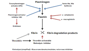 Coagulation Of Blood Flow Chart Medical And Scientific Information