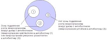 Реферат на тему Методы определения чувствительности бактерий к  Определение чувствительности микроорганизмов диско диффузионным методом