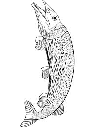 Small Picture Pike coloring pages Download and print Pike coloring pages
