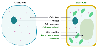 cell membrane definition function