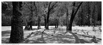 black and white snow photography. Modren Snow Panoramic Black And White PicturePhoto Oak Trees Snow El Capitan  Meadow Yosemite National Park Intended And Snow Photography H