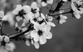 Znalezione obrazy dla zapytania spring  black and white