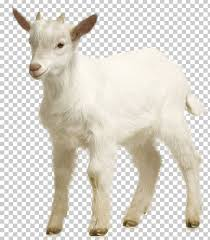 Goat Chart Goat Sheep Png Clipart Animals Chart Computer Graphics