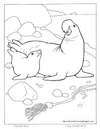 Seal Coloring Page Seal Coloring Page Seal Coloring Page Coloring