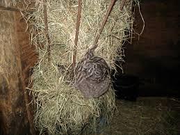 Goat Lice Lice On Goats Kadil Carpentersdaughter Co