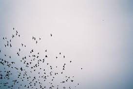birds flying in the sky tumblr. Perfect Tumblr Bird Sky And Photography Image For Birds Flying In The Sky Tumblr