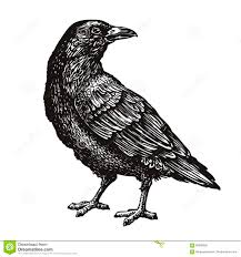 нарисованная вручную черная ворона ворон эскиз птицы иллюстрация
