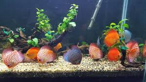 Image result for specialized type of aquarium