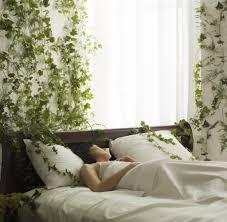 Nasa Empfiehlt Diese 5 Pflanzen Reinigen Die Luft In Deiner Wohnung