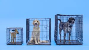 Midwest Icrate Size Breed Chart How To Find The Right Size Crate For Your Dog Chewy