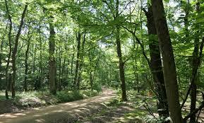"""Résultat de recherche d'images pour """"forêt de Lespinasse 42"""""""