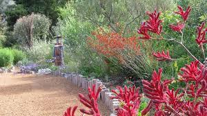 australian native garden like the wooden posts garden bed plants