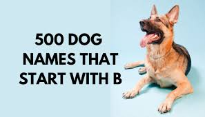 500 dog names that start with b puppy