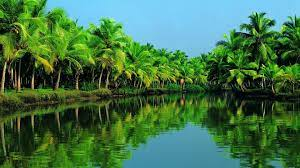India wallpaper, asia, forest, river ...