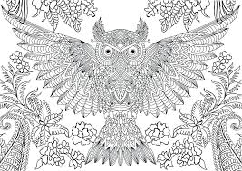 Baby Owl Coloring Pages Owl Color Pages Good Owl Coloring Pages For