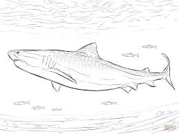 Small Picture Realistic Tiger Shark coloring page Free Printable Coloring Pages