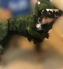 Dinosaur Costume Pet Dog Clothes Halloween Winter Chihuahua
