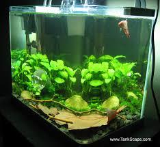 betta fish 10 gallon tank setup
