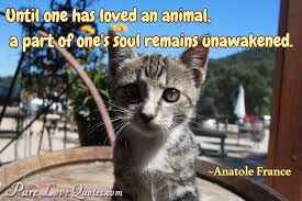 Until One Has Loved An Animal A Part Of One's Soul Remains Magnificent Love Animal Quotes