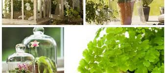 25 april 2016 ten plants to grow in closed terrariums under cloches