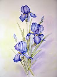blue irises painting stock ilration ilration of watercolour 166344