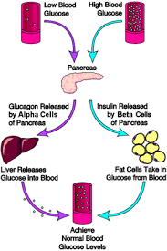 Insulin Sugar Chart Insulin Regulation Of Blood Sugar And Diabetes The