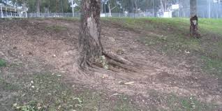 Preventing And Managing Erosion Environment Land And