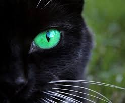 black cats with green eyes wallpaper. Plain Eyes Black Cats With Green Eyes  Wallpaper And Wallpaper